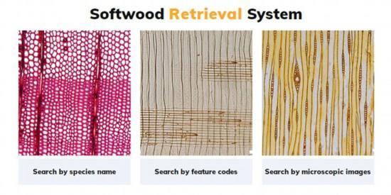 包含9个科180种!针叶树材检索系统上线运行.jpeg