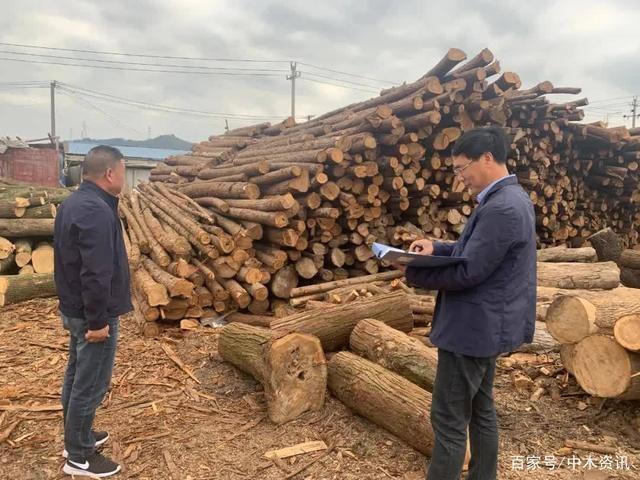 浙江宁海县开展木材经营加工单位专项监督检查.jpg