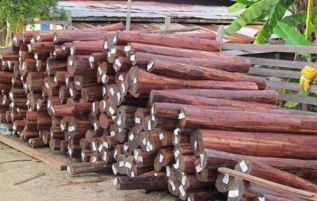 世界上最轻和最重的木头.jpg