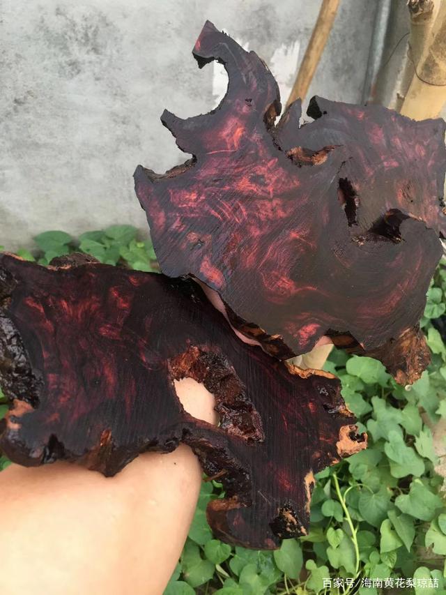 疫情下的美国木材贸易它也曾见过世事沉浮,看木材之王的兴衰,细数海南黄花梨的历史.jpeg