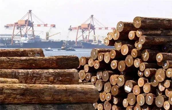 中国贸易禁令下,澳洲数万吨木材积压如山!.jpeg