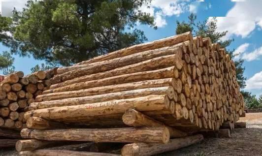 为什么实木地板每年价格都在上涨.png