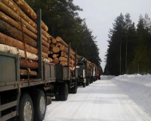 「访谈」对俄木材企业问题答疑解惑,木材供应和口岸时间预测!.png