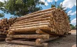 我是一个木材人!.jpg