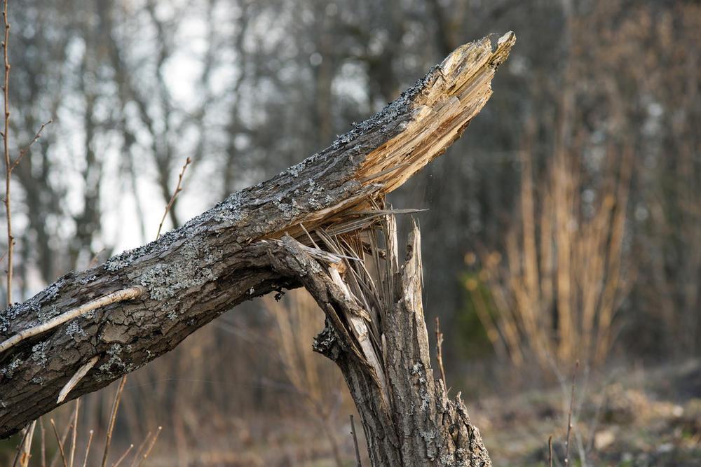 疫情叠加灾害影响或致木材价格上涨.jpeg