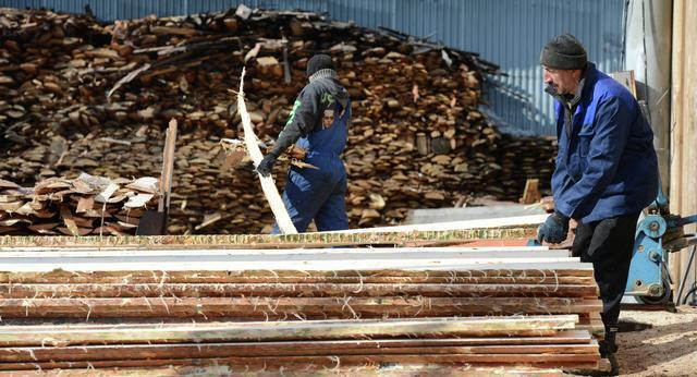 2020年俄远东已发现的木材走私额达到13亿卢布!.jpg