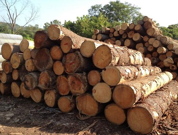 为什么要建立国家储备林制度!.jpeg