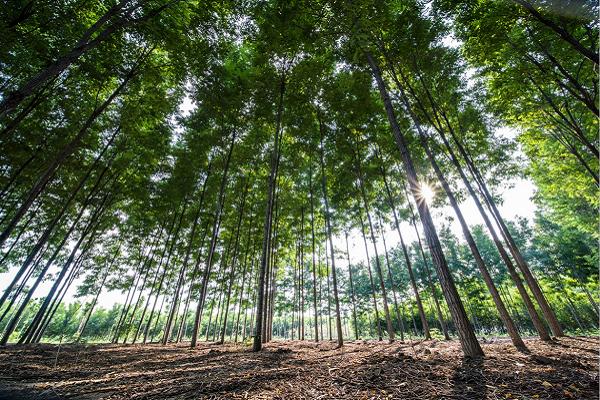 为什么要建立国家储备林制度!.png