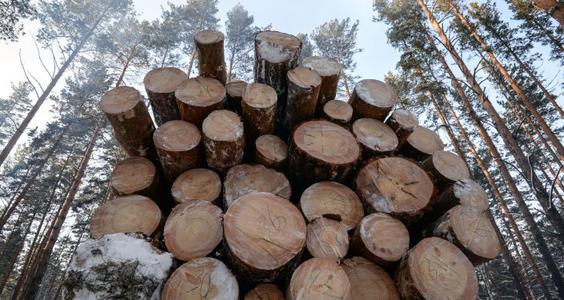 聽說下一波木材消費熱潮在農村?.jpg