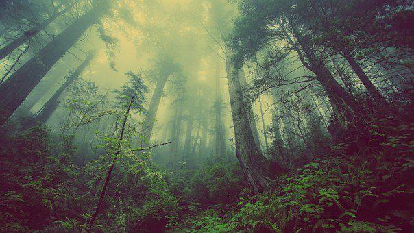 新南威爾士州原生森林造林.png