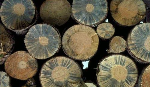 木材為什么會發生霉變,藍變?.png
