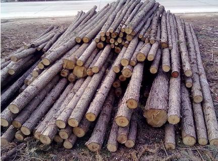 杉木托盘有哪些特点