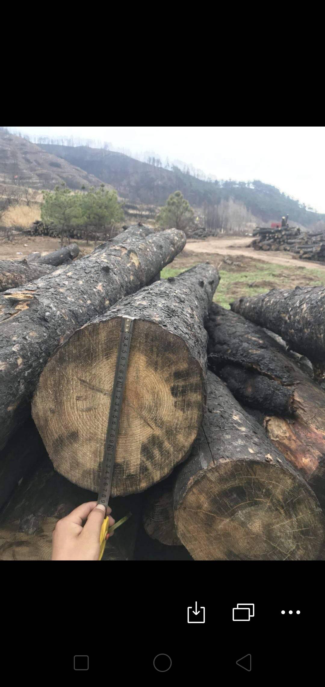 达州山西长治油松木